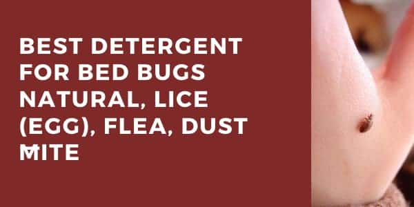 7+ Best Detergent for Bed Bugs Natural, Lice (Egg), Flea, Dust Mite